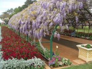Toowoomba Carnival of Flowers 2010