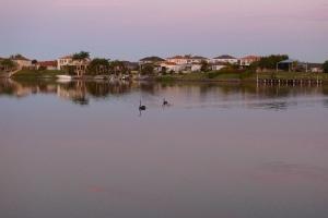 Varsity Lakes -水鳥